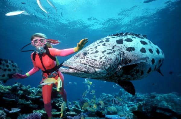 Great Barrier Reef, Queensland - the world's largest coral reef comprises more than 3,000 individual reef systems and beautiful beaches.